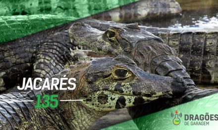 Dragões de Garagem #135 Jacarés