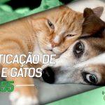 Dragões de Garagem #155 Domesticação de Cães e Gatos